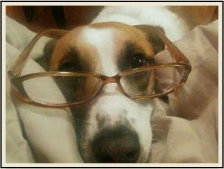 Literary Dog